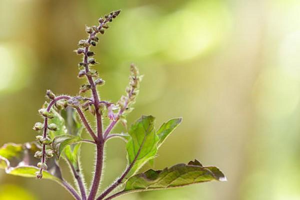 Wirkstoff Serie: Mutter Natur ist abgefahren. Episode I: Adaptogene – Pflanzliche Heilmittel