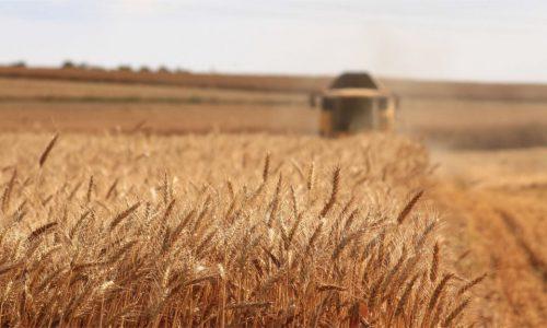 Glyphosat – Massenpflanzenhaltung Teil 1