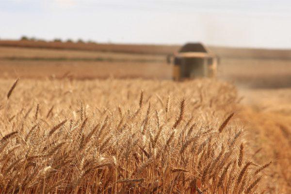 Glyphosat – Massenpflanzenhaltung Teil 2