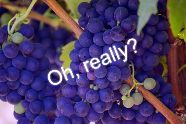 Einspruch! Artikel – Recap #1 Fruktose