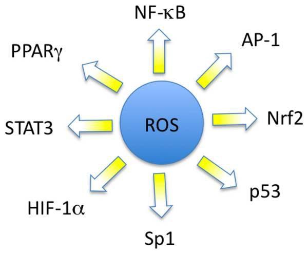 ROS und einige ihrer Transkriptionsfaktoren (Signale)